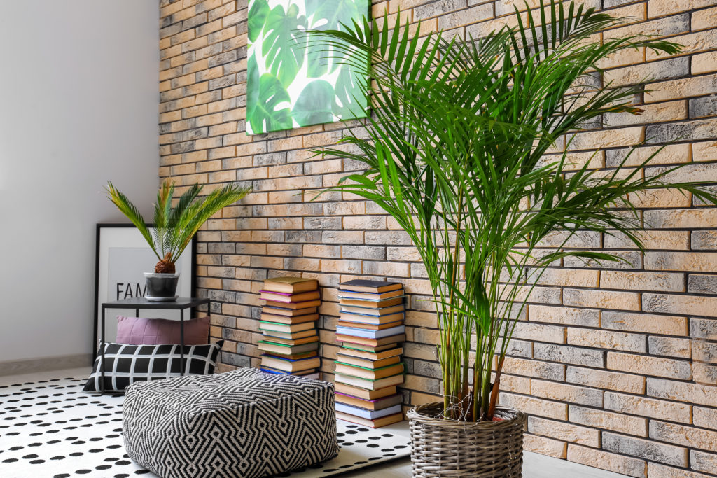Bild einer Areca Palme